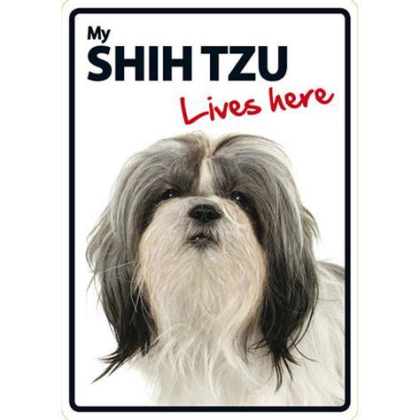 shih tzu signs my shih tzu lives here sign 5060194111659 calendars
