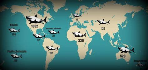 Croatia 01 Raglan was surfer 252 ber haiangriffe wissen sollten
