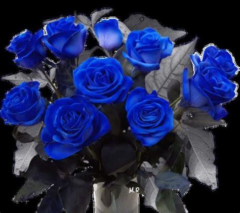 zedge imagenes de rosas 17 best images about flores y rosas on pinterest amor