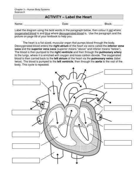 anatomy labeling worksheet labeling of the organ anatomy