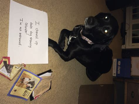 dog shaming desk there s still plenty of time to get on the nice list
