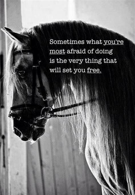 printable horse quotes best 25 horse riding quotes ideas on pinterest horse