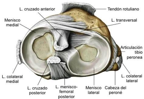 meniscopatia interna lesiones de los meniscos