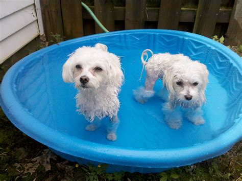 Planschbecken Kunststoff Hund by Best Plastic Swimming Pool With Slide Amazing
