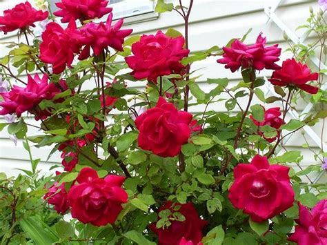 bunga bunga yang indah