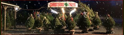 lehigh valley christmas tree farm trees herbeins garden center pa lehigh valley nursery landscaping