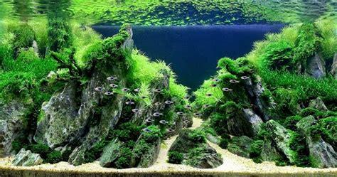 membuat bukit aquascape design aquascape karya maestro dunia part ii dunia akuarium