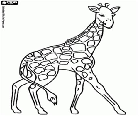 giraffe eating coloring pages giraffes coloring pages printable games