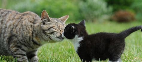 Show Me Your Cat Eye 5 by Introduce A New Kitten To A Resident Cat In 5 Steps