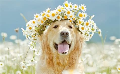 Cheerful Fantasia Flowercrown Flower Crown 101 nature inspired names barkpost