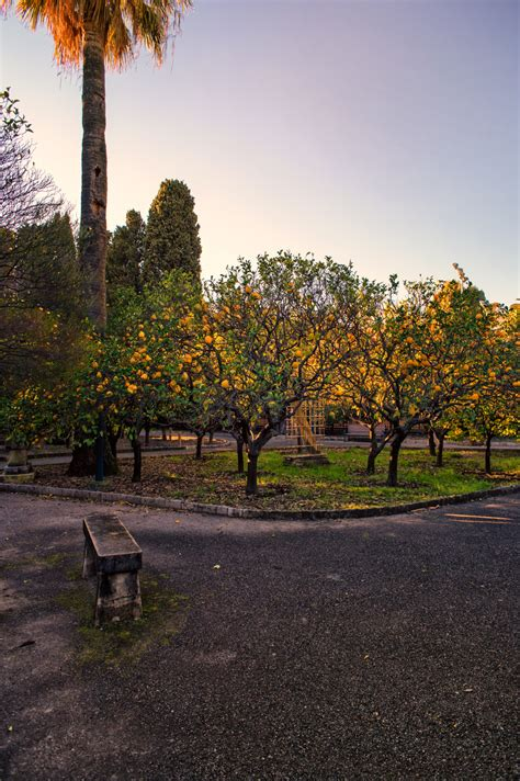 i giardini di via verro i giardini di palazzo carnoles a mentone