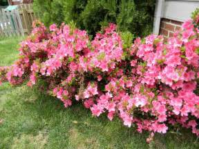 gardening landscaping shrubs for full sun decoration