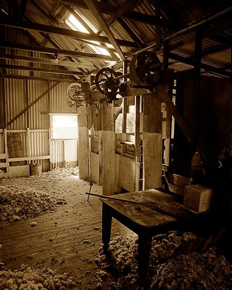 Shering Shed by Shearing Shed Strathbogie