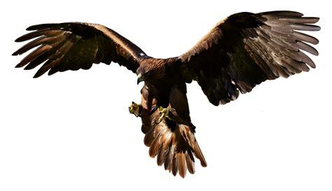 guilas y cuervos 8416331170 dibujo de aguila en png cosas en png escudo de m 233