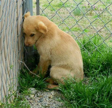 scared puppy fearful fido your best friend llc your best friend llc