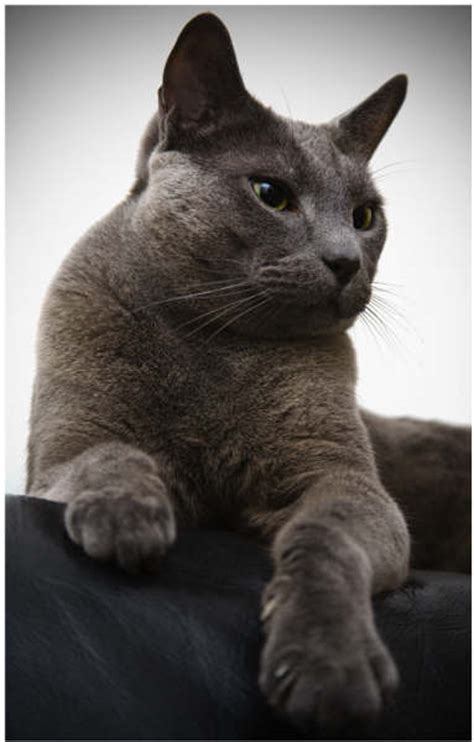 film blue russian russian blue gill raddings stunt dogs and animals for