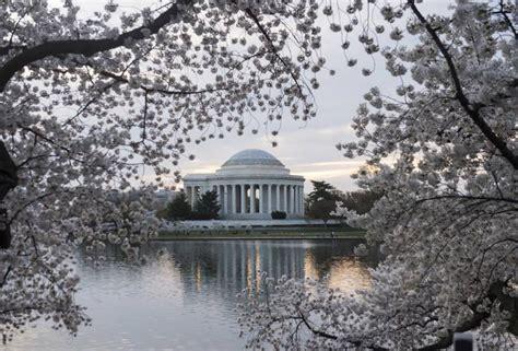 cherry blossoms washington d c time