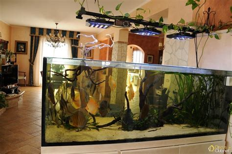 costruire lada a led illuminazione acquario kelvin illuminazione acquario
