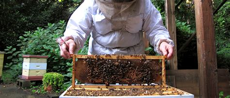 backyard apiary backyard beekeeping growing a greener world