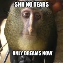 Monkey Meme - 15 funny and adorable monkey memes