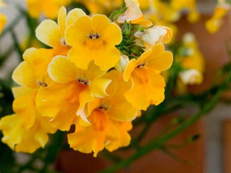 fiori gialli o t t u r a t o r e casa fiori gialli