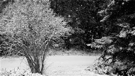 imagenes gif nevando black and white snow gif find share on giphy