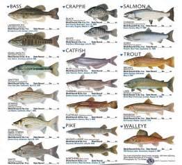 Freshwater Fish 35 Photoshop Fish Brushes Creative Cancreative Can