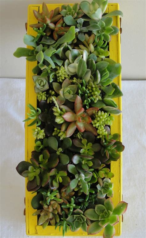 indoor vertical succulent garden indoor vertical succulent garden www imgkid the