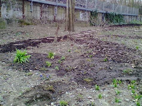 Kleine B Ume F R Garten 3325 pflanzen f 252 r kleinen garten fr hlingsarbeiten in rosas