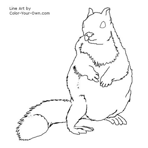 ground squirrel coloring page ground squirrel drawing