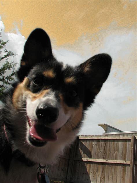 charleston dog house gallery charleston dog house dog daycare doggie
