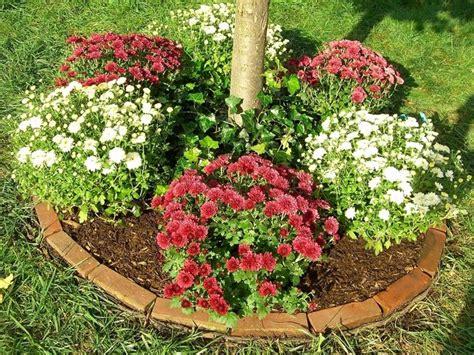 fiori crisantemi crisantemi piante perenni curare i crisantemi