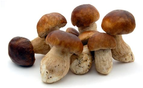 porcini mushrooms frozen 2 2 lbs buy at marky s gourmet store