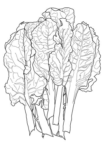 Chard Coloring page | SuperColoring.com