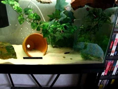 squirt the red ear slider turtle tank set up youtube