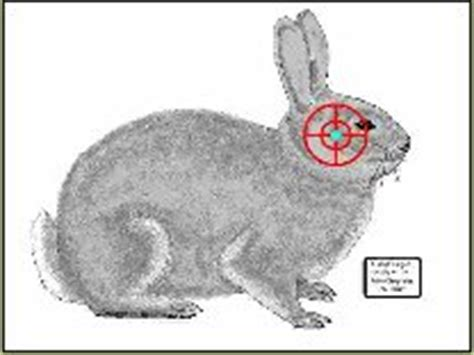 printable rabbit shooting targets tatget bunny home