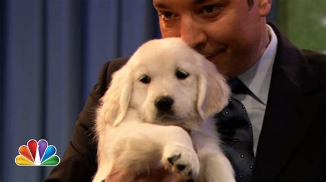 jimmy fallon puppies adorable puppies predict the winner of the bowl on late with jimmy
