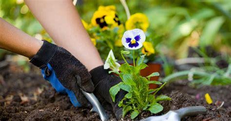 gardening pictures g1 em manaus minicurso de jardinagem e paisagismo tem