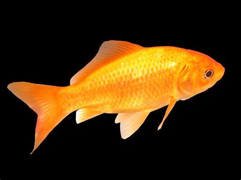 www fish high definition photo and wallpapers fish pictures fish