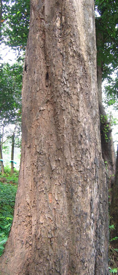 tree water sugar bananas how many calories fats carbs proteins vitamins