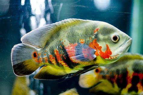 peluang usaha budidaya ikan indonesia image gallery ikan