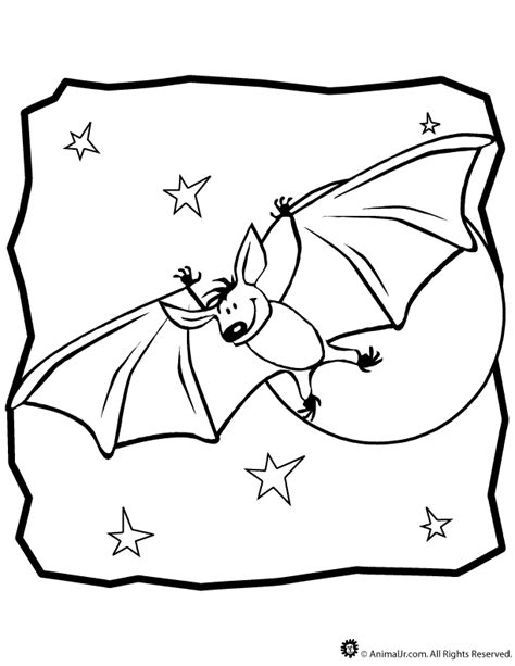 coloring pages of nocturnal animals nocturnal animals coloring pages coloring home