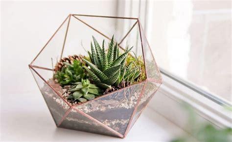 decoracion de interiores con plantas de sombra plantas de interior en decoraci 243 n tipos y consejos para casa