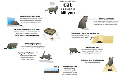 how to tell a is how to tell if your cat is plotting to kill you by rjace1014 on deviantart