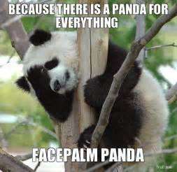 Cute Panda Memes - forever alone funny red panda meme