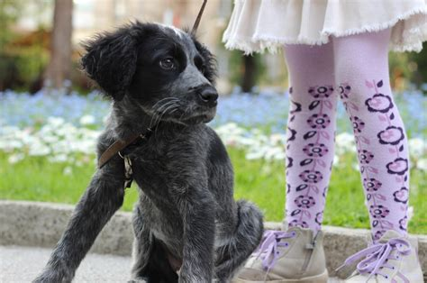 adhd in dogs learn more about the benefits of pets for children with adhd at mindmed
