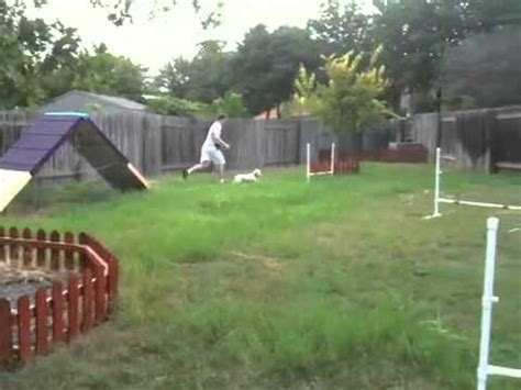 backyard agility course ruby on homemade dog agility course youtube