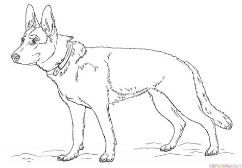 german shepherd puppy drawing how to draw a german shepherd step by step drawing tutorials