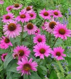 2214 Best Everything Plants And Flowers Images On Pinterest Flowering Plant Flowers Growing Everything About