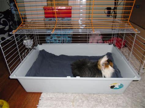 camas para cobayas los chiribiquis de winga m 225 s camas para cobayas y m 225 quina